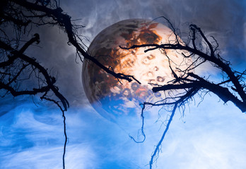 branches of the moon and clouds