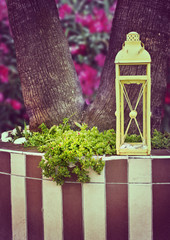 Decorative lantern on the background of a flowering tree. Origin