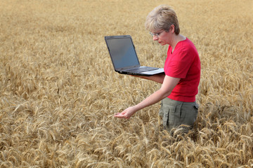 Agriculture, agronomist examine wheat field using laptop