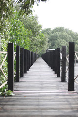 Mangrove forest wooden walkway.