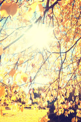 leaves of autumn flare