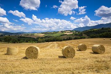 Paesaggio con le colline marchigiane d'estate
