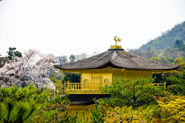 Golden Pavilion Kinkakuji Temple at Japan