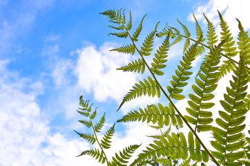 Green fern leaves on a background of sky and clouds