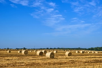 Field after the harvest, big round straw bales in the field