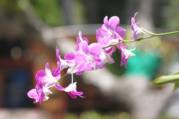 Purple orchid on tre.
