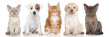 Group of small kitten and puppies - 67330104