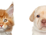 Kitten and puppy. Half of muzzle portrait