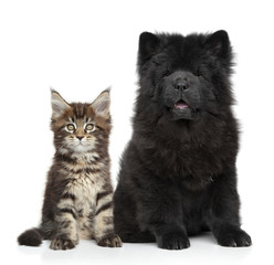 Kitten and Puppy on white