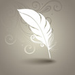 Vector Template with Peerless Feather in Ornate Background. Coll