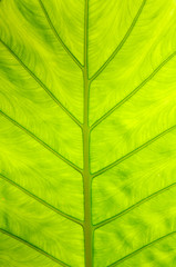 Green leaf texture in sunlight