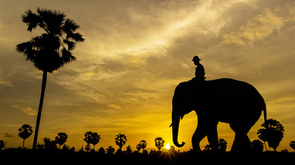 Palm tree with elephant on sunset