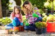 Mother and daughter planting flowers together. - 67334990