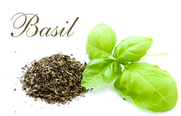 fresh and dried basil isolated