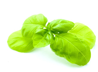 leaf of basil isolated