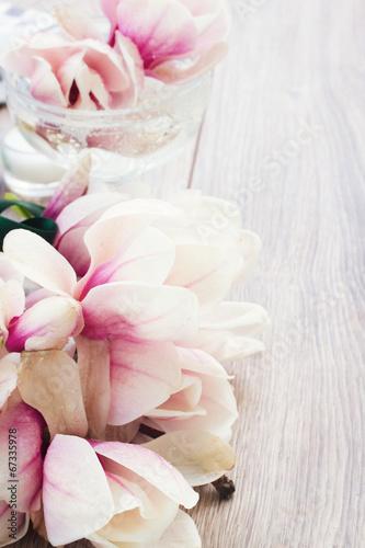 Staande foto Magnolia magnolia flowers