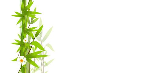 bambù, composizione, foglie
