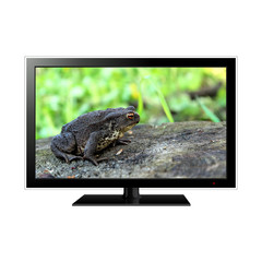 Modern LCD monitor isolated on white with frog in the screen