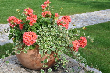 Flowers in flower pot in the garden