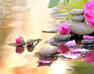 rose in water and Spa stones with drops