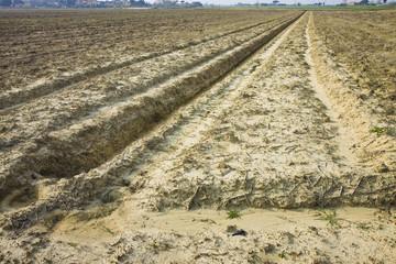 Ditch field