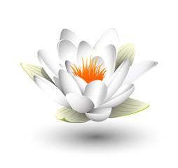 fiore di loro, sfondo bianco, sospeso