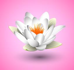 fiore di loro, sfondo rosa, sospeso