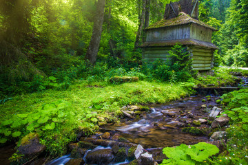 Water stream and ancient hut over green forest background