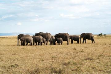 Famille éléphants unis
