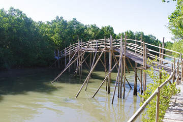 mangrove forest, wooden bridge