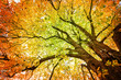 canvas print picture - Herbst-Baum Version 2