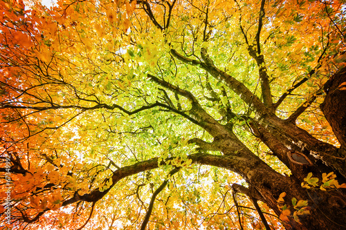 canvas print picture Herbst-Baum Version 2