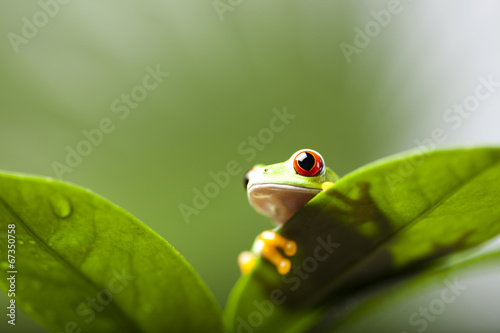 Foto op Aluminium Kikker Frog shadow on the leaf