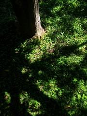 Green sunny meadow