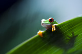 Frog on the leaf