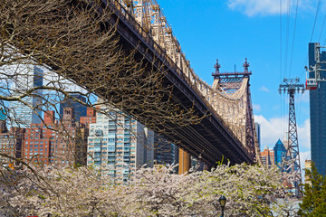 Bridge, blooming trees and a view on Manhattan, New York.