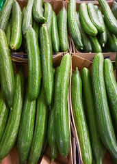 green cucumber.  Cucumbers For Sale At Market