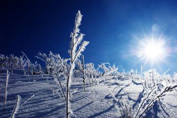 plfanzen eingefroren an wintertag