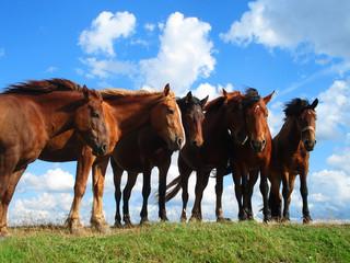 Лошади наслаждаются порывами ветра, спасающими их от насекомых