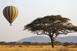 Leinwanddruck Bild - Flying green and yellow balloon near an acacia tree