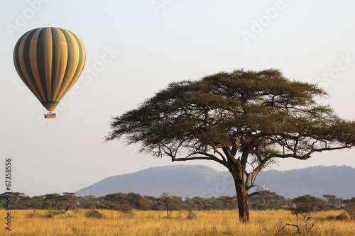 Leinwanddruck Bild Flying green and yellow balloon near an acacia tree