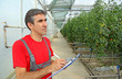Farmer in a Greenhouse, calculated production of tomatoes
