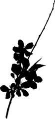sakura branch silhouette black color