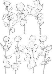 seven black rose flowers sketches isolated on white