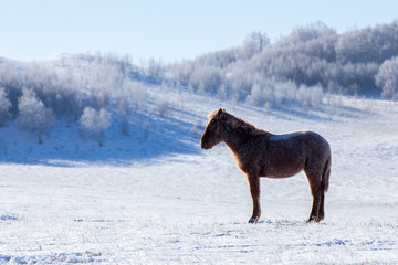 The horse ranch in winter