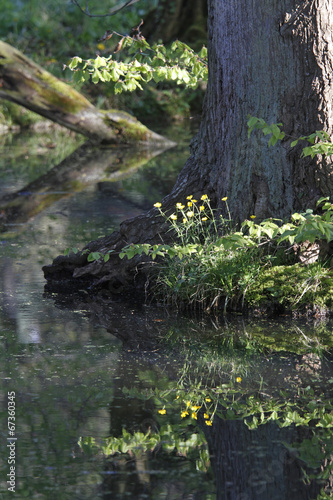canvas print picture im Wald