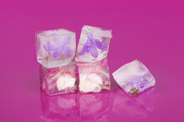 Flowers frozen in ice cubes.