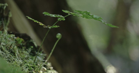 A small tall green grass on the mossy tree 4K FS700 Odyssey 7Q
