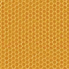 Realistic Seamless Texture of Honeycomb