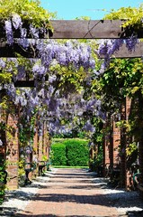 Wisteria covered walkway © Arena Photo UK